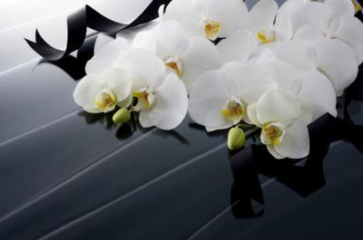 floraria orhideea