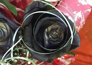 floraria gabriela